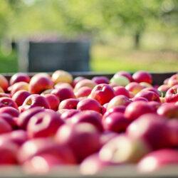 Neues spannende Projekt gestartet – Online Direktvertrieb im Bereich Landwirtschaft